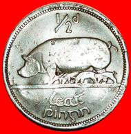 + PIG AND PIGLETS (1928-1937): IRELAND ★ 1/2 PENNY 1928! LOW START ★ NO RESERVE! - Irlanda