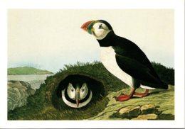 Birds Atlantic Puffin - Birds