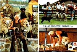 New Zealand Rotorua Riverdale Park Agrodome - New Zealand