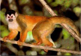 Squirrel Monkey Corcovado National Park Costa Rica 1989 - Monkeys
