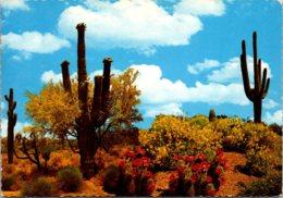Giant Saguaro Cactus Springtime On The Desert 1973 - Cactusses