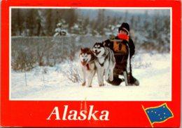 Alaska Dog Sled Team Sledding In The Fast Track - Dogs