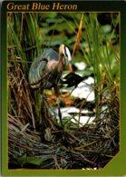 Birds Great Blue Heron - Birds