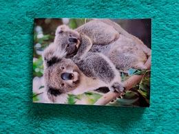 Petit Bloc-note Avec Koalas - Other Collections