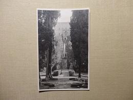 3 X Tivoli - Villa D'Este (5472) - Parks & Gardens