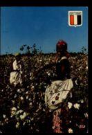 C1396 COTE D'IVOIRE IVORY COAST - RÉCOLTE DU COTON PRÈS DE BUOAKÉ FEMME AFRICAIN FOLKLORE ETHNICS AFRICA - Costa D'Avorio
