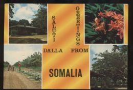 C1416 SALUTI DALLA SOMALIA CON PIANTAGIONI DI BANANE AZIENDA AGRICOLA BANANE VG 1980 - Somalia