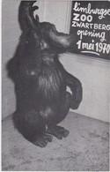 ZWARTBERG-GENK-LIMBURGSE-ZOO-DIERENTUIN-CHIMPANSEE-RECLAMEKAART-OPENING-1970-ZIE 2 SCANS-afmet.8,5/13,50 Cm-MOOI ! ! ! - Genk