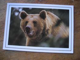 Oso Pardo  Ursus Arctos Ours Brun Des Pyrenées Brown Bear - Bären