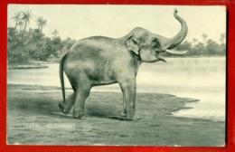 ELEPHANT VINTAGE POSTCARD USED 663 - Elephants