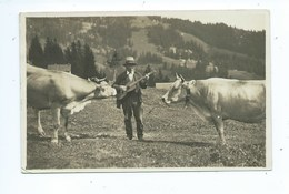 Motiv Am Rigi ( Vaches ) - SZ Schwyz