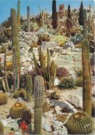 EZE - Le Jardin Exotique - Cactus - Cactus