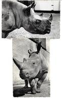 3081n: 2 AKs Rhinozeros, Zoo Von Antwerpen, Ungelaufen 1958 - Neushoorn