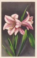 AK Lilie  Blumen (41694) - Blumen