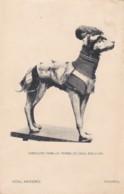 AQ31 Animals - Dog, Armadura Para Un Perro De Caza, Siglo XVI - Dogs