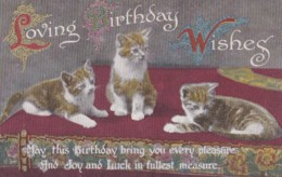AQ31 Greetings - Loving Birthday Wishes - 3 Cats - Birthday