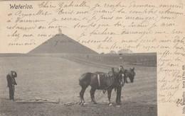 Waterloo , Bel Attelage De Chevaux De Trait Tirant Une Herse Devant La Butte Du Lion ,( Cheval De Trait , Ploegpaard ) - Chevaux