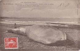 ILE D'OLERON (17) - Plage Domino - Baleine échouée - Braun 1798 - 1909 - Ile D'Oléron