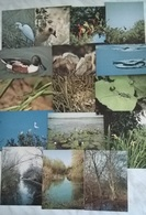 16 CARTOLINE OASI PUNTA ALBERETE RAVENNA    (2) - Cartoline
