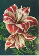 3-Fiori-Fleurs-Flowers-Blumen-Flores-Grande Formato - Fiori