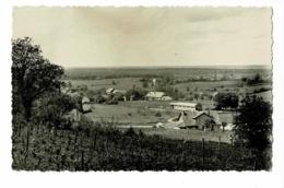 Montholier - Partie Ouest Du Pays (vignes Au Premier Plan) Circulé 1953 - Autres Communes