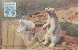 Canada Carte Maximum 1953 Ours Blanc 257 - Maximumkaarten