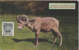 Canada Carte Maximum 1953 Mouflon 259 - Maximumkaarten