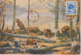 Canada Carte Maximum 1953 Castor 274 - Maximumkaarten