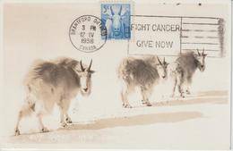Canada Carte Maximum 1956 Chèvre Des Montagnes 288 - Maximumkaarten