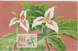 Canada Carte Maximum 1964  Fleurs D'érable 343 - Maximumkaarten