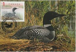 Canada Carte Maximum 1999 Oiseaux Huard 1616 - Maximumkaarten