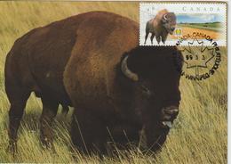Canada Carte Maximum 1999 Bison 1644 - Maximumkaarten