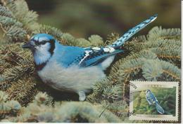 Canada Carte Maximum 2000 Oiseaux Geai 1810 - Maximumkaarten