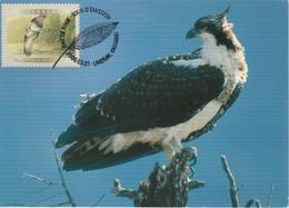 Canada Carte Maximum 2000 Oiseaux Balbuzard 1812 - Maximumkaarten