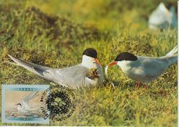 Canada Carte Maximum 2001 Oiseaux Sterne 1843 - Maximumkaarten