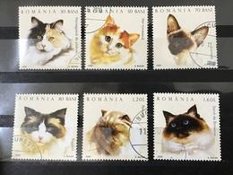 Roemenië / Romania - Complete Set Katten 2006 - 1948-.... Repúblicas