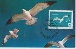 Argentine Carte Maximum 1966 Oiseaux Albatros PA 114 - Poste Aérienne
