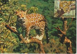 Nicaragua Carte Maximum 1983 Animaux Jaguar Timbre Du BF 160 - Nicaragua