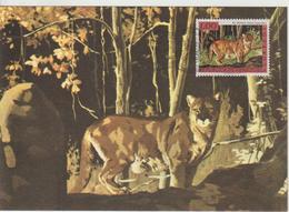 Venezuela Carte Maximum 1963 Animaux Puma 672 - Venezuela