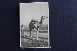 F-189 / Bruxelles Auxiliaires Laïques Des Missions,  Retournnà La Terre En Palestine / 19? - Missions
