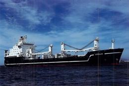 "Photo Couleur Ancienne Originale Bateau C G M  "" Utrillo "" 1978 La Ciotat Puis "" American Merlin "" 1992 USA Navy - Cargos"