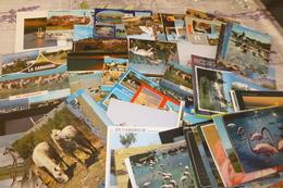 LOT DE 85 CARTES ...CAMARGUE ...PAYSAGES...CHEVAUX....ANIMAUX.... - Cartoline