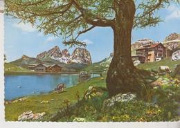 Dolomiti Gruppo Del Sassolungo E Colonia Gonzaga 1958 - Trento