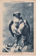 L'AIGLE ROYAL. LA SAVOIE TOURISTIQUE. PHOTOGRAPHIE GRIMAL. CPA CIRCA 1930's - BLEUP - Pájaros