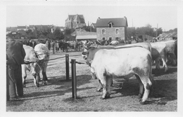 ¤¤  -  HERBIGNAC   -  Le Champ De Foire  -  Marché Aux Bestiaux  -  Vaches , Boeufs    -  ¤¤ - Herbignac
