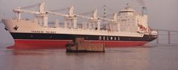 """SAINT-NAZAIRE  -  Cliché Du Bateau De Commerce """" THERESE DELMAS """" Dans Le Port - Cargo  -  Voir Description     -   ¤¤ - Saint Nazaire"""