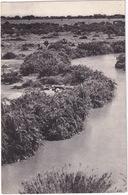 Plain Of The Edward-lake, The Rutshuru River At Gwangwa: Hippos Sleeping On A Sand-bank - (Congo Belge) - Belgisch-Congo - Varia