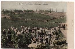 Côte D'Or : Scène De Vendanges En Bourgogne (Editeur Louis Venot, Dijon, LV N°16 - Photo A. Vuillaume, Beaune) - Autres Communes