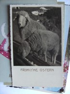 Sheep Fröhliche Ostern - Andere