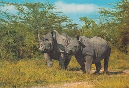 Kenia  - East Afrika  - Rhinoceros -  Nashorn - Nice Stamp - Kenia